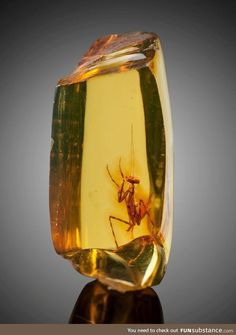 Minerals, Crystals & Fossils — Praying Mantis in Amber (Hymenaea protera,. Cool Rocks, Beautiful Rocks, Minerals And Gemstones, Rocks And Minerals, Amber Fossils, Praying Mantis, Mineral Stone, Rocks And Gems, Prehistoric