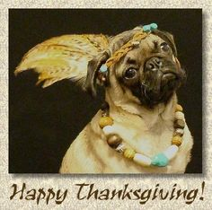 Doggonegreetings - ecards for dog lovers - Thanksgiving - Pug Princess Thanksgiving