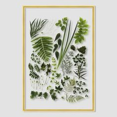 Spring Botanicals Acrylic Wall Art - Stunning botanical photographs printed on acrylic make a stunning wall piece
