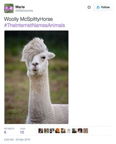 39 Best Internet renames animals images in 2016 | Funny