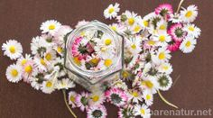 Gänseblümchen-Tinktur – gegen Akne, Mitesser und unreine Haut The daisy contains many valuable ingredients that you can preserve in a tincture and use all year round. Diy Shampoo, Medicinal Herbs, Natural Cosmetics, Diy Beauty, Beauty Tips, The Balm, Diy And Crafts, Floral Wreath, Make It Yourself
