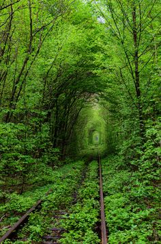 looking for the gnome, gotta be in there somewhere! Tunnel of Love, Kleven, Ukraine