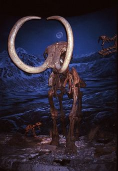 Mammoth, Royal Tyrrell Museum, Drumheller, Alberta, Canada