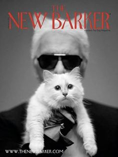 Karl Lagerfeld whispered and we listened. The next edition of THE NEW BARKER will have a cat section. We're kidding (about the Karl Lagerfeld part). Actually, we heard from many of our readers who are definitely dog lovers living with cats. So, yes, CattyCorner will be back by popular dogmand. There is still time to subscribe (how about a gift subscription for a special dog lover on your Christmas shopping list?). #cats #kitty #kittens #dogmagazine #catsection #doglover #christmas #giftideas