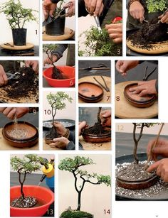 practical-steps-to-create-make-bonsai-tree.jpg