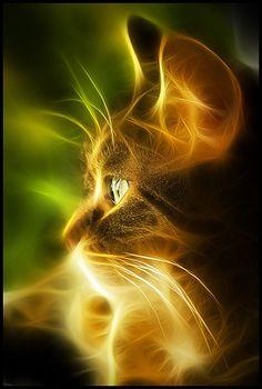 https://flic.kr/p/8LKwiE | fractalius kitty