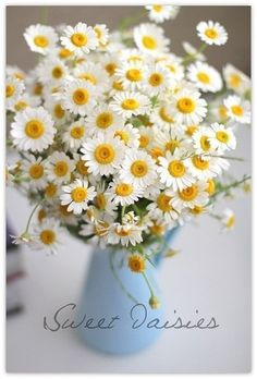 sweet daisies in a blue pitcher!