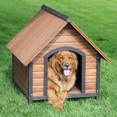 Precision Outback Country Lodge Dog House with FREE Door - Solid fir wood construction with a raised floor, waterproof leg protectors, and a peaked roof design help to keep your pet dry. A durable weatherpr. Dog House For Sale, Large Dog House, Outdoor Shelters, Outdoor Dog, Dog House Heater, Le Plus Grand Chien, Canis, Wood Dog House, Grande Niche