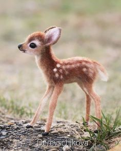 The 100 Cutest Animals Of All Time - List Inspire All amazing animals from cute cats to adorable turtles. Here is The 100 Cutest Animals Of All Time for you to enjoy. Baby Animals Super Cute, Cute Little Animals, Cute Funny Animals, Cute Cats, Tiny Baby Animals, Big Cats, Baby Animals Pictures, Cute Animal Photos, Animals Images