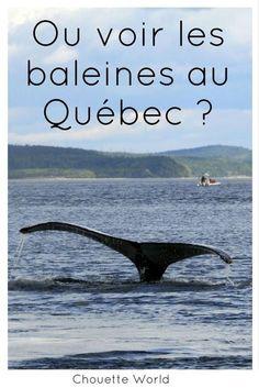 Tadoussac est un des meilleurs spots du Quebec pour voir les baleines !