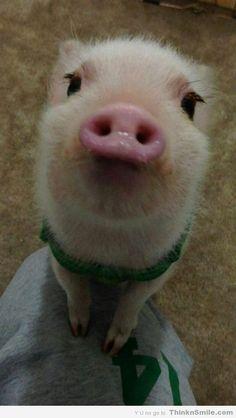 Hellooooooo! Happy pigs. :)