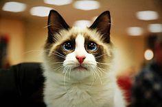 aww pretty kitty...do not have a sad! :(