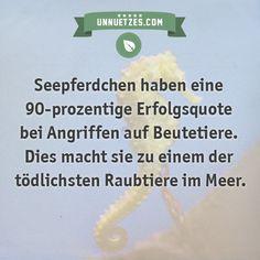 Mehr dazu: http://www.unnuetzes.com/wissen/10161/seepferdchen/