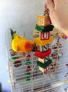 Sun conure sunny with his homemade bird toy. // this would be fun to sell as a customizable product with the bird's name. Just a thought!