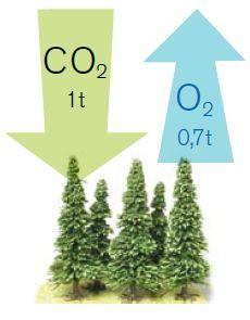 Metsät, puu ja ilmasto | Puuinfo Science, Home Decor, Decoration Home, Room Decor, Flag, Interior Design, Home Interiors, Interior Decorating