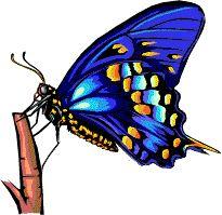 Xenamelo mariposas