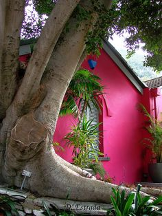 """I'd love to say, """"I'm the tiny, hot pink cottage under the giant tree."""""""