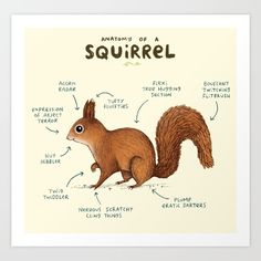 Anatomy of a Squirrel by Sophie Corrigan, available for purchase on society6