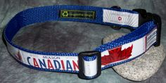 Adjustable Dog Collar from Recycled Molson Beer labels by squigglechick, $20.00
