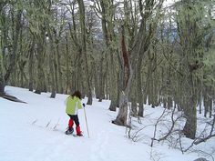 Caminata con raquetas en bosque de lengas en San Martín de los Andes