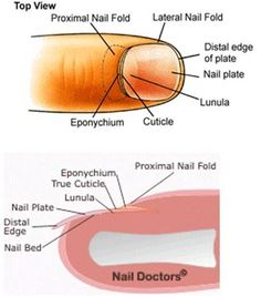 Cuticle Care This is the most comprehensive site on nail care ever! – Cuticle Care This is the most comprehensive site on nail care ever! – Cuticle Care This is the most comprehensive site on nail care ever! Cuticle Care, Cuticle Remover, Nail Courses, Split Nails, Nail Care Tips, Nail Tips, School Nails, Nail Repair, Manicure Y Pedicure