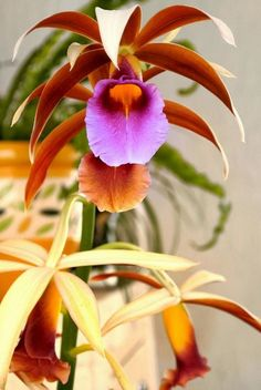 My neighbor has beautiful flowers in your home, here are other orchids Unusual Flowers, Most Beautiful Flowers, Rare Flowers, Types Of Flowers, Pretty Flowers, Beautiful Gorgeous, Lilies Flowers, Purple Flowers, Orchid Plants