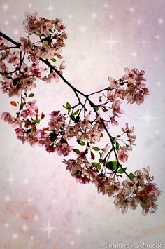 Kids Wall Art Pink Apple Blossoms by SoulCenteredPhotoart on Etsy, $30.00