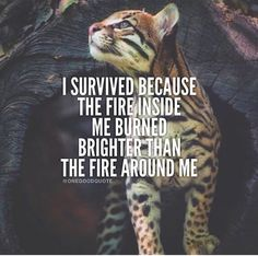 I survived because the fire inside me burned brighter than the fire around me,meme