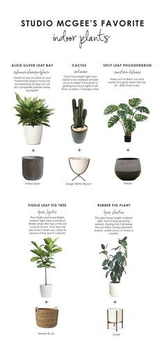 We love to bring the outside in and add a little greenery in any kind of space! Today we've rounded up some of our favorite indoor plants + planters AND how to take care of them! Some can be used as a