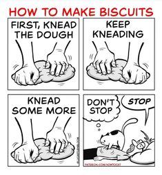 How To Cat, How To Make Biscuits, San Diego Living, Cat Comics, Finding Joy, Happy People, Bored Panda, Comic Strips, Funny Cats