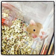 Rats and hamsters are curious by nature. They need lots of toys and playtime with humans to satisfy their urge to explore. Does your pet like to play?