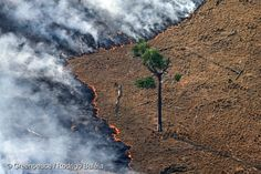 Burning pasture in deforested area in the Amazon. 25 Aug, 2008 © Greenpeace / Rodrigo Baléia