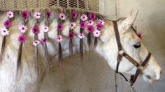 Obsession Blumen in der Pferdemähne All The Pretty Horses, Beautiful Horses, Animals Beautiful, Cute Animals, Horse Mane, Horse Girl, Horse Hair Braiding, Horse Costumes, Horse Grooming