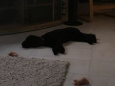 I think  I'll have a nap now. So cool on the lovely tiles and aircon on in this horrible heat. Zzzzzz #kaywaldingcelebrant