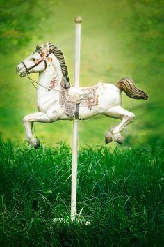 Best Photo Background, Background For Photography, Horse Photography, Photography Backdrops, Deer Bedding, Carosel Horse, Orchard Design, Hobby Horse, Digital Backdrops
