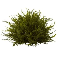 Found it at Wayfair - Nearly Natural Cedar Ball Topiary Silk Plants, Fake Plants, Types Of Plants, Indoor Plants, Artificial Boxwood, Artificial Plants, Cedar Plant, Unique Plants, Tree Silhouette