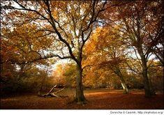 plaatje van een bos in de herfst