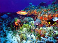 Isla Cozumel, located in the Mexican Caribbean, is a world class dive destination exploding with marine life and a wide variety of terrain for all divers! http://aquaviews.net/scuba-dive-destinations/5-popular-dive-sites-cozumel/