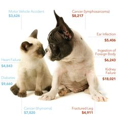 The Cost of Caring for Your Pet. You can't put a price on unconditional love.