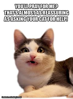 Atheism, Religion, God is Imaginary, Prayer. You'll pray for me? That's almost as reassuring as asking your cat for help!