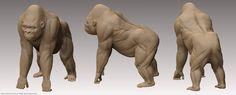 gorilla anatomy - Google Search