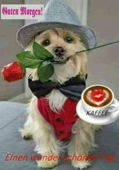 Healthy snacks for dogs on a diet menu food prices Happy Birthday Images, Happy Birthday Wishes, Birthday Greetings, Animals And Pets, Baby Animals, Cute Animals, Funny Dogs, Cute Dogs, Funny Good Night Quotes