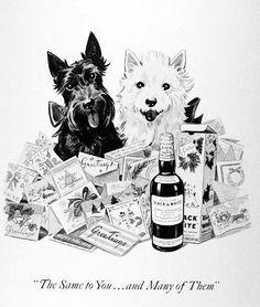 Chiens 'Whisky Black & White' - Illustration Vintage - 1952