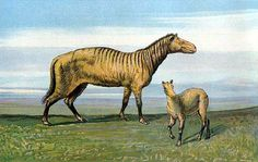 Are You Familiar With These 10 Prehistoric Horses?: Orohippus (45 Million Years Ago)