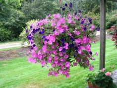 Hanging basket itdea from Gardening Info Zone