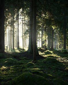 "wanderthewood: ""Småland, Jönköping, Sweden by life.by.linus """