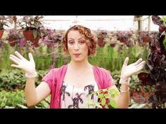 Manual rápido de como podar roseiras e outras plantas - YouTube
