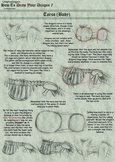 Torso: How to Draw Your Dragon 7 by LittleFireDragon on deviantART