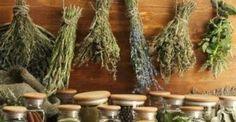 #Υγεία #Διατροφή Τα βότανα αυτά, νικούν το διαβήτη και θα τα βρείτε όλα στην Ελλάδα! ΔΕΙΤΕ ΕΔΩ: http://biologikaorganikaproionta.com/health/215621/