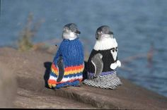 They are dressed because they are victims of an oil disaster and this keeps them warm. I like people who knit for them a lot.